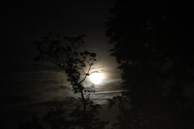 キャンプ場 月夜